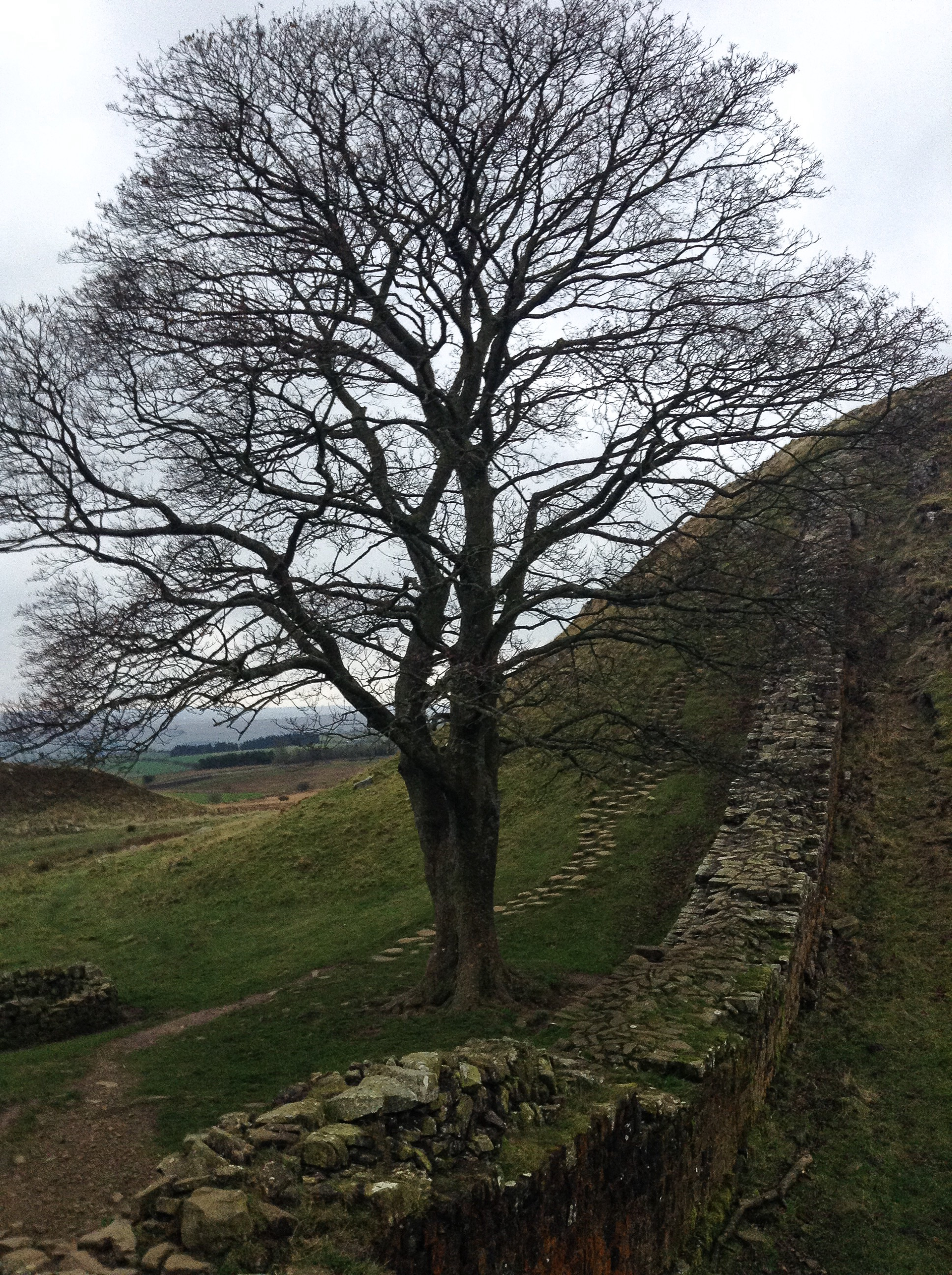 Sycamore Gap along Hadrian's Wall, used as one of the filming locations in Robin Hood: Prince of Thieves