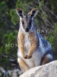 A Day Out At Monarto Zoo