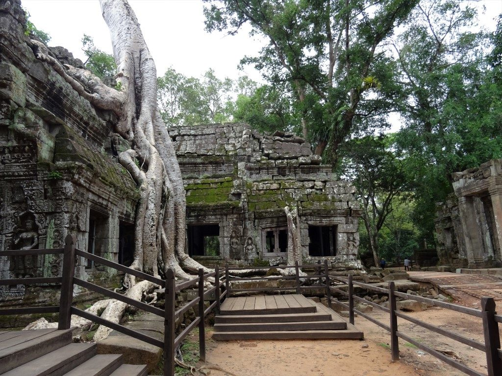 One of the most recognisable trees in Ta Prohm