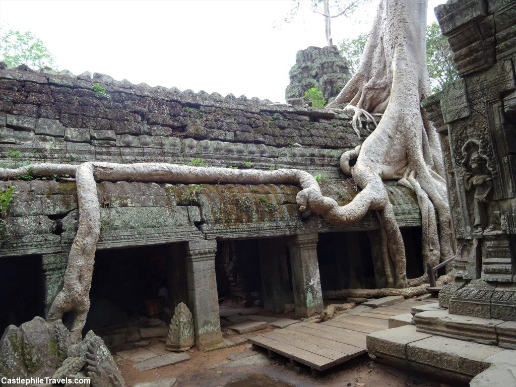 Tree root running along a wall of Ta Prohm